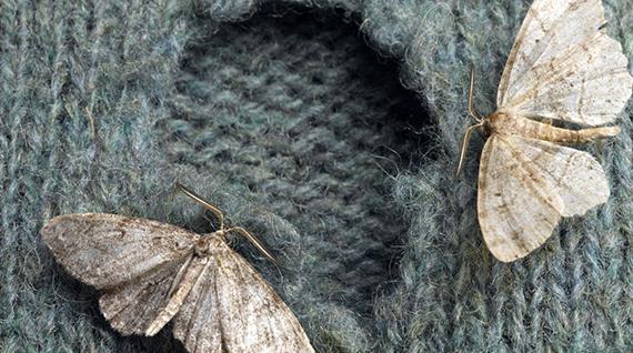 Motten In Huis Wat Te Doen Tegen Motten